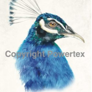 "A4 Art Bird Print ""Peacock"" to use for photo transfers or collage, Powertex Australia"