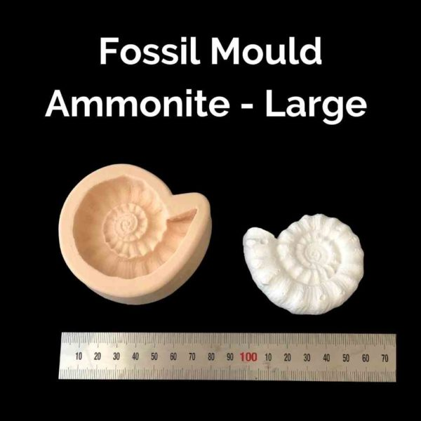 Fossil Mould - Large Ammonites - Powertex Australia
